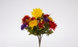 Aster Mum Daisy Bush X 14 Fall Multi