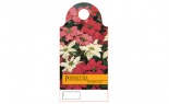 Care Cards Poinsettia