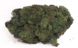 4 Oz Reindeer Moss Green