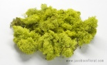 8 Oz Preserved Reindeer Moss Chartreuse