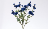 Cornflower Bush Dark Blue