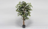 4' Banyan Ficus Tree In 5