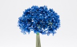 Bouquet Style Hydrangea X 6 Royal Blue